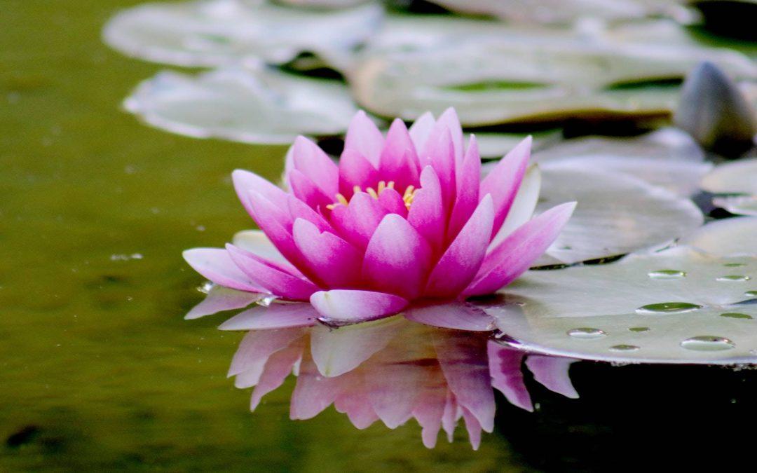 Tudomány – Spiritualitás: Öntsünk tiszta vizet a pohárba!